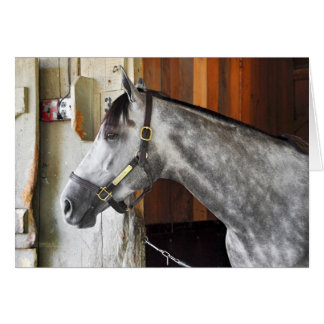 Destin - Horse Haven Card