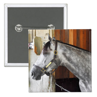 Destin - Horse Haven Pinback Button
