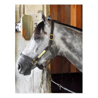 Destin - Horse Haven Postcard