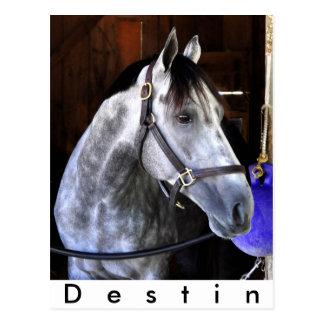 Destin Postcard