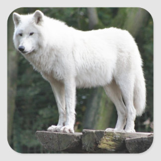 Destino animal del amor de la paz de la naturaleza pegatina cuadrada