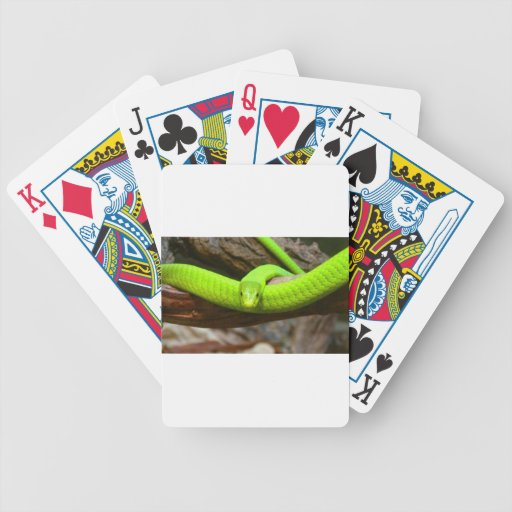 Destino asustadizo animal del fiesta de la mamba v barajas de cartas