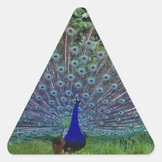 Destino colorido del indio del arte del pavo real pegatina triangular