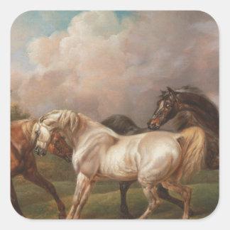 Destino de los caballos del aceite de la pintura pegatina cuadrada