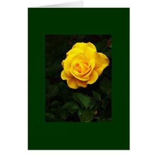 Destino del amor de la paz de la naturaleza de la  felicitacion