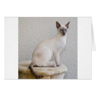 Destino del gatito del maullido del ronroneo del tarjeta de felicitación