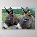 Destino del país del animal del campo de la mula d impresiones