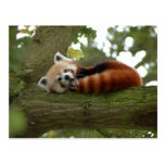 Destino lindo de la naturaleza del oso de panda ro postales