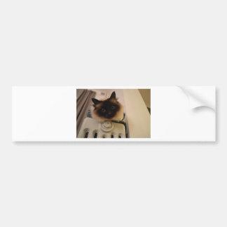 Destino lindo siamés del maullido del ronroneo del etiqueta de parachoque