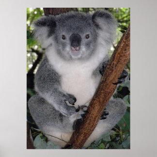 Destino lindo Zazzle Aussi de la koala interior Impresiones