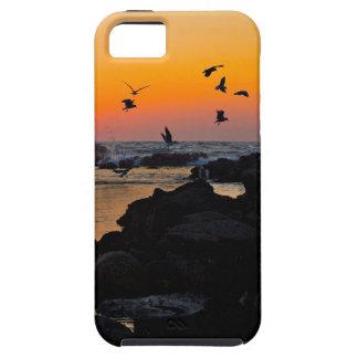 Destino tropical de la palma de la puesta del sol iPhone 5 protector