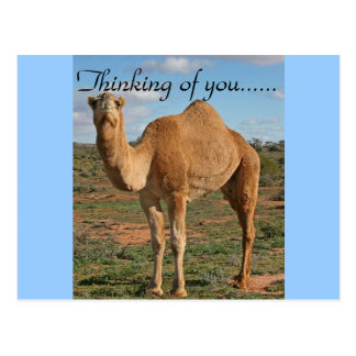 Destino Zazzle del desierto del camello que piensa Tarjeta Postal