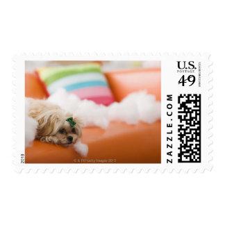 Destructive dog stamps