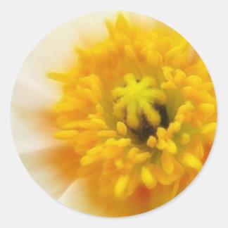 Detail - Iceland Poppy Classic Round Sticker