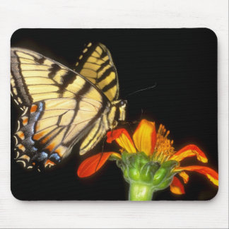 Detail of a captive western tiger swallowtail mouse pad