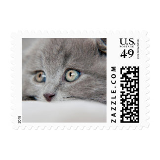 Detail Of A Cat Eyes Postage