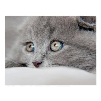 Detail Of A Cat Eyes Postcard