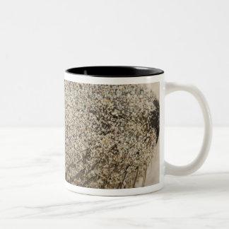Detail of a Galapagos sealion Zalophus Two-Tone Coffee Mug