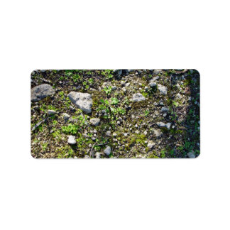 Detail of a small lichen plants on a rocky surface address label