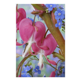 Detail of bleeding hearts and Brunnera Jack Photo Print