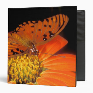 Detail of captive gulf fritillary butterfly on binders