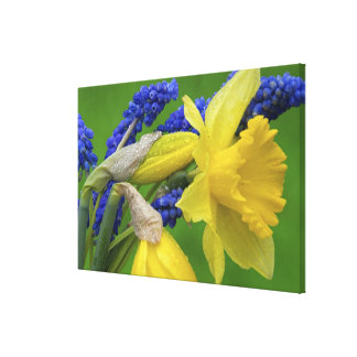 Detail of daffodil and hyacinth flowers. Credit Canvas Print