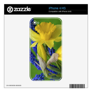 Detail of daffodil and hyacinth flowers. Credit Decals For iPhone 4S