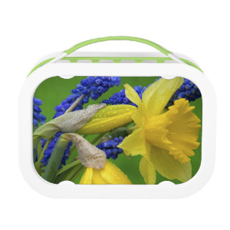 Detail of daffodil and hyacinth flowers. Credit Lunch Box