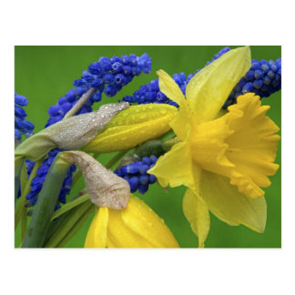 Detail of daffodil and hyacinth flowers. Credit Postcard