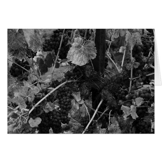 Detail of Grapes, Draper Vineyard, Napa, 1966 Card