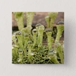 Detail of raindrops on lichen. Credit as: Don Pinback Button