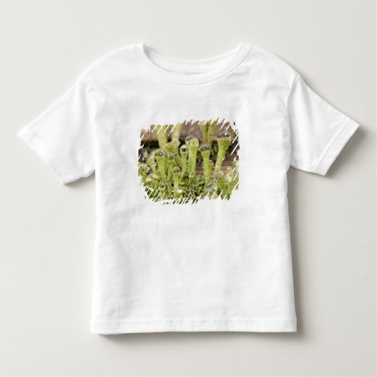Detail of raindrops on lichen. Credit as: Don Toddler T-shirt