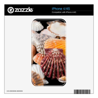Detail Of Seashells From Around The World 2 Skins For iPhone 4S