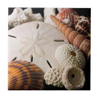 Detail Of Seashells From Around The World Small Square Tile