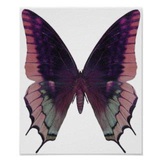 Detailed Butterfly Pink Poster