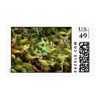 Detailed Moss Postage