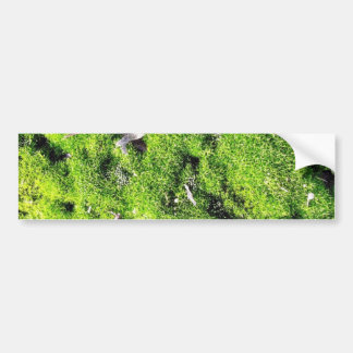 Detailed Photo Of Green Moss Bumper Stickers