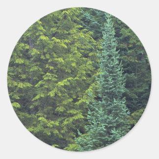 Detalle abstracto del bosque del abeto de la picea pegatina redonda