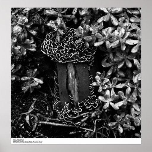Detalle de abril de 1965 fungoso poster