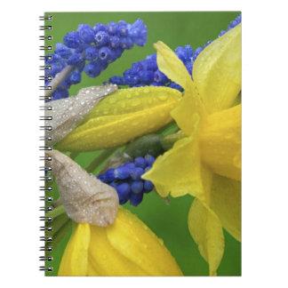 Detalle de las flores del narciso y del jacinto. C Libros De Apuntes