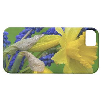 Detalle de las flores del narciso y del jacinto. iPhone 5 funda