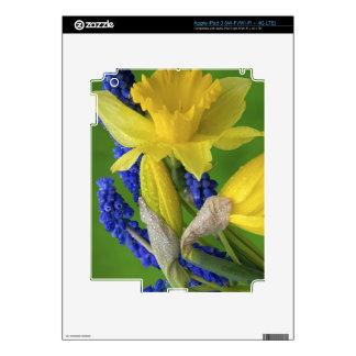 Detalle de las flores del narciso y del jacinto. pegatina skin para iPad 3