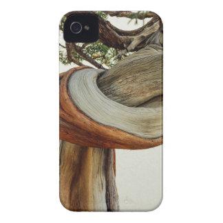 Detalle de los bonsais del enebro iPhone 4 coberturas