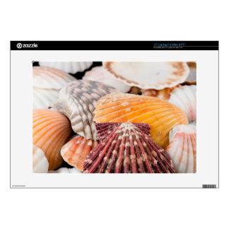 Detalle de los Seashells de alrededor del mundo 2 Calcomanías Para 38,1cm Portátiles