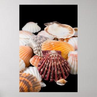 Detalle de los Seashells de alrededor del mundo 2 Póster