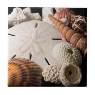 Detalle de Seashells de alrededor del mundo Azulejo Cuadrado Pequeño