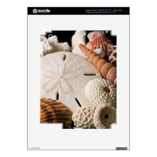 Detalle de Seashells de alrededor del mundo Pegatina Skin Para iPad 3