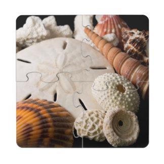 Detalle de Seashells de alrededor del mundo Posavasos De Puzzle