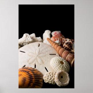 Detalle de Seashells de alrededor del mundo Póster