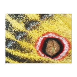 Detalle del ala de la polilla de emperador lona envuelta para galerias